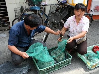 閘蟹、1匹5元(80円)。上海 ...